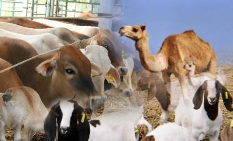 Nishab Zakat Binatang Ternak dan Jumlah yang Wajib Dikeluarkan